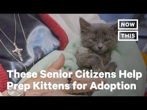 Senior Citizens Help Prepare Kittens For Adoption At Kitten Social Hour | NowThis