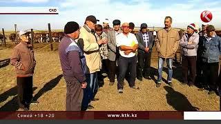 Анализ ДНК лошадей намерены провести в Северном Казахстане