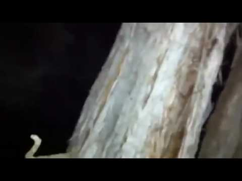 BigFoot 2017 - Terrifying Night time Encounter In Colorado!