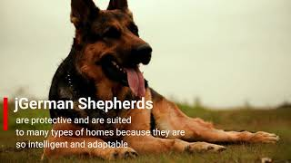 Top 10 breed German  shepherd Dog