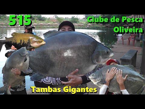 Oliveira - Os tambacus gigantes na superfície - Fishingtur na TV 515