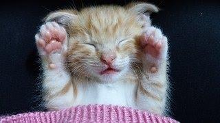 ♫💤 Détente Complète Chiens Et Chats ♣ Musique Douce Pour Dormir ♣ Calme l'Agitation Et l'Anxiété