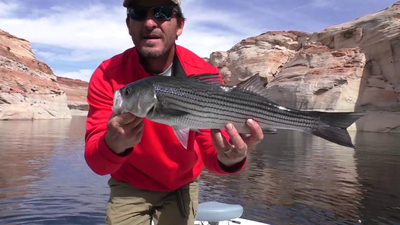 Lake powell striped bass fishing 101 youtube for Lake powell fishing