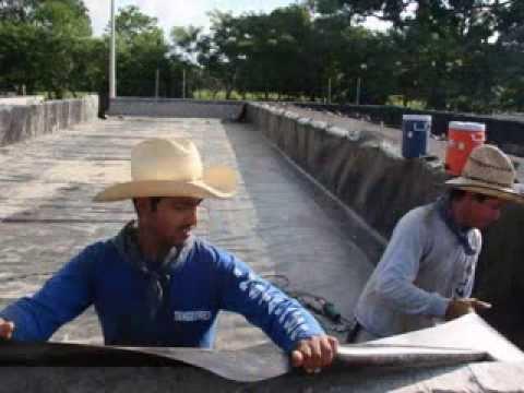 Tanques de geomembrana para tilapia tangeomex doovi Estanques para cachamas