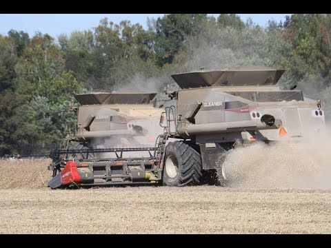 Gleaner S77 Combines Harvesting Soybeans