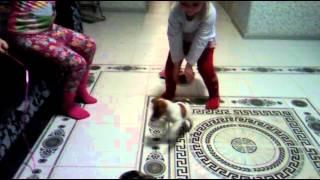 Джек рассел терьер играет с детьми