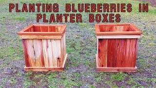 Planting Blueberries In Planter Boxes