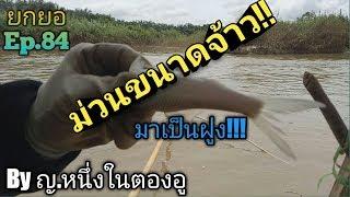 สุดยอด!ยกยอวันปลามา part1/2 ปลาสร้อยโดดเป็นฝูง!!