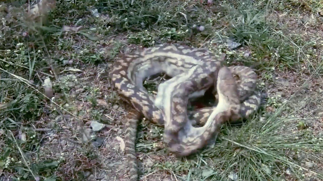 ЛЕВ ТАКОГО НЕ ОЖИДАЛ ОТ ЗЕБРЫ! 10 Сумасшедших схваток животных снятых на камеру людьми