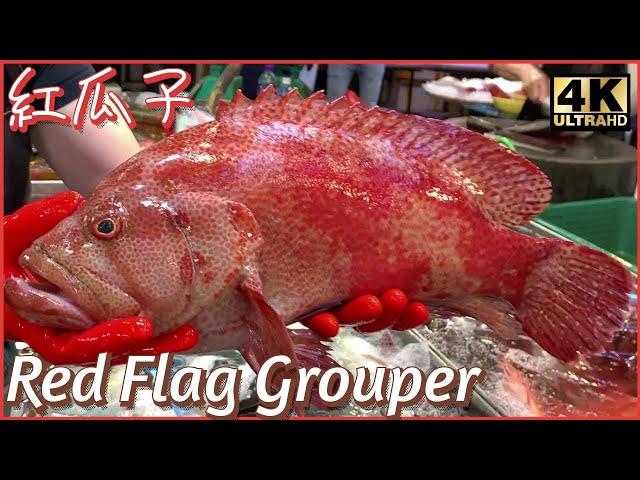 【OH! Seafood 4K】生劏 紅瓜子 血腥慎入 Red Flag Grouper 巨大きな魚 漁民海鮮 西環魚王