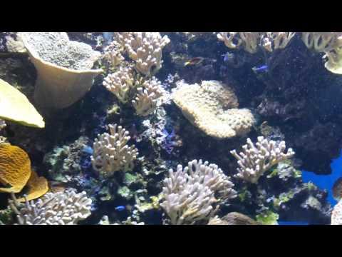 Monaco's aquarium