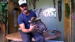 Monkey Tailed Skinks, Baby Tort Updates & Diamond Pythons!!!