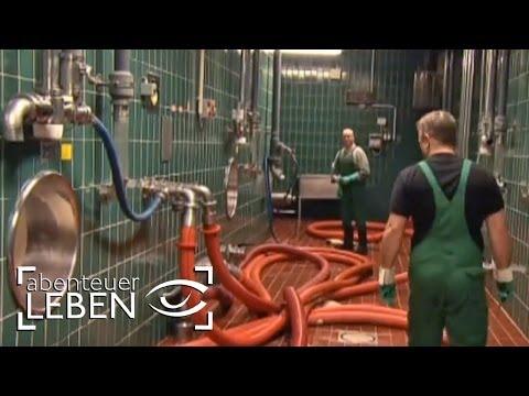 Wie Funktioniert Die Beck's Brauerei? (1/2)   Abenteuer Leben