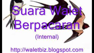 Walet Berpacaran.wmv