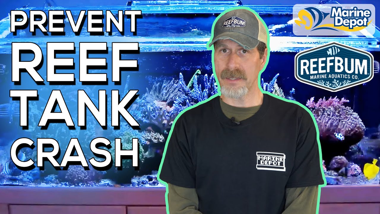 Reef Tank Crash Prevention! | Tips and Backups To Prevent Disaster with ReefBum in 6 Minutes Thumbnail