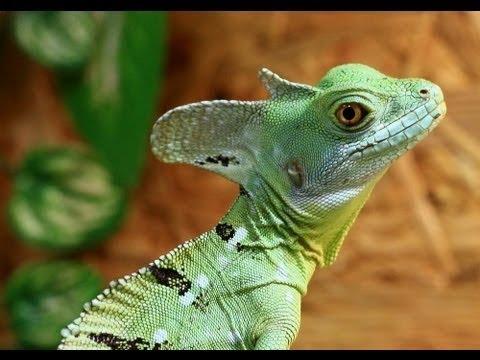Grusel Der Natur   Reptilien doku Deutsch