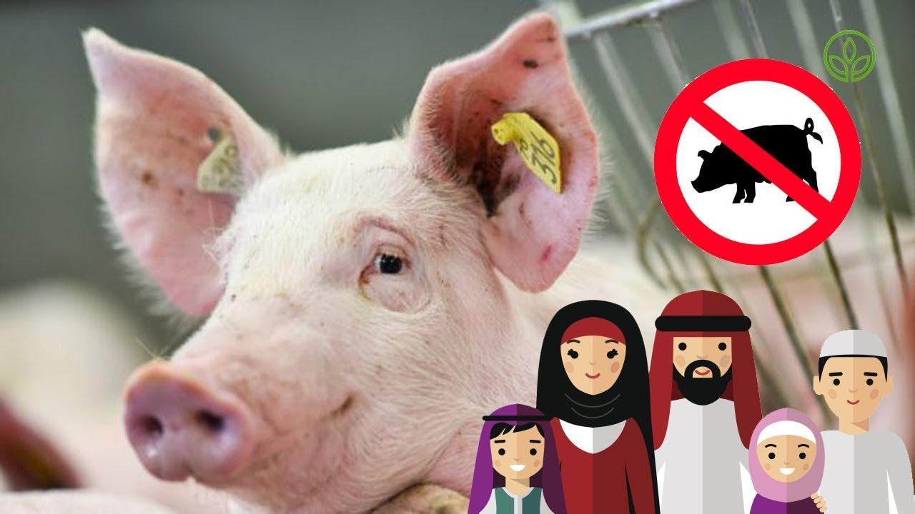 Kein Schweinefleisch Essen