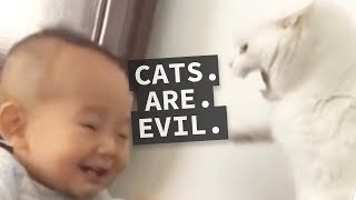 Cats are Evil Compilation - Why Cats Can't be Trusted