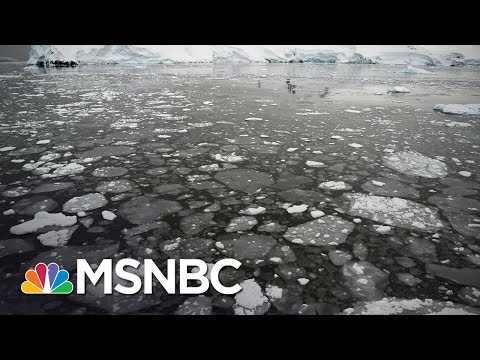 Climate Change Advocates Worry About Donald Trump   MSNBC