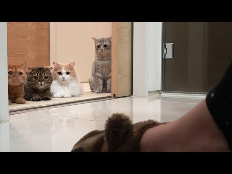 The cats follow me all the time! (ENG SUB)