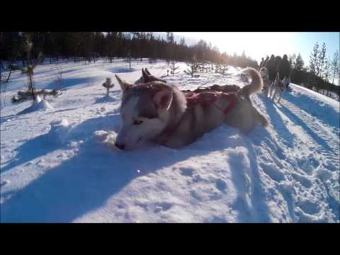 Trip Murmansk (Northern Lights, Husky's, Teriberka)