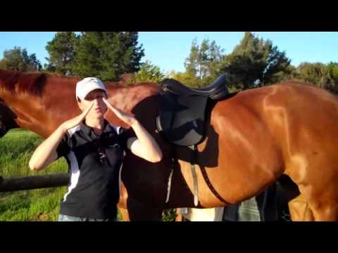 Part 2 Matching Saddles to Your Horse's T