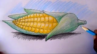 How to draw Corn cob step by step