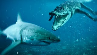 This Crocodile Has to Live With Sharks!