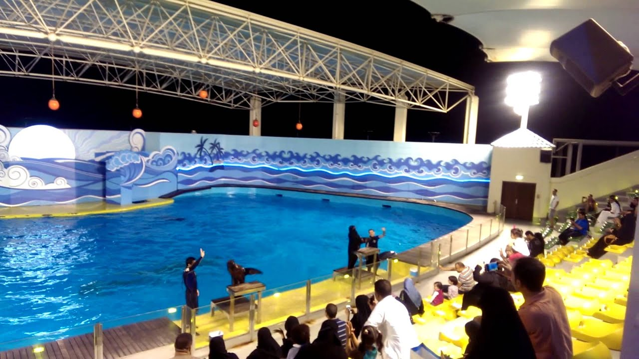 Fish aquarium jeddah - Fakieh Aquarium Dolphin Show Intro Seals 2014