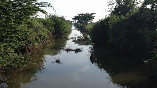 Landscape of canal and cast nets fishing ទេសភាពប្រលាយបង្ហូរទឹក ការនេសាទត្រី