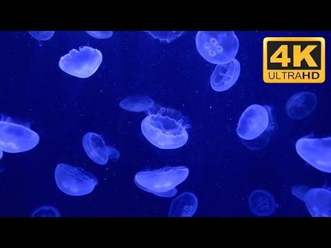 ★-★-★ Beautiful Relaxing 4K Jellyfish Aquarium Screensaver ★-★-★
