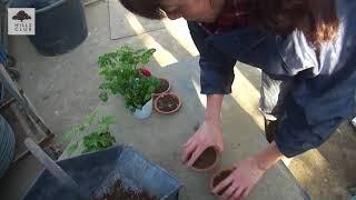 園芸家の杉井志織さんが、水持ちの良い土と水はけの良い土の作り方を紹...