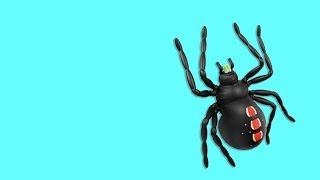 🐾 Игра для кошек, котов и котят! На экране онлайн для вашей кошки бегает паук по своей паутине!