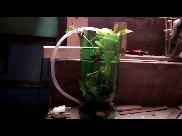 Aquarium Ikan Cupang Sederhana Dengan Botol Plastik Bekas Tinuleutik