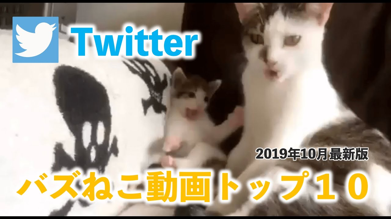 猫 動画 人気 2019