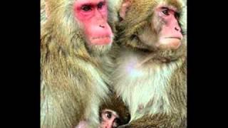 Tarzan de los monos de Gibraltar