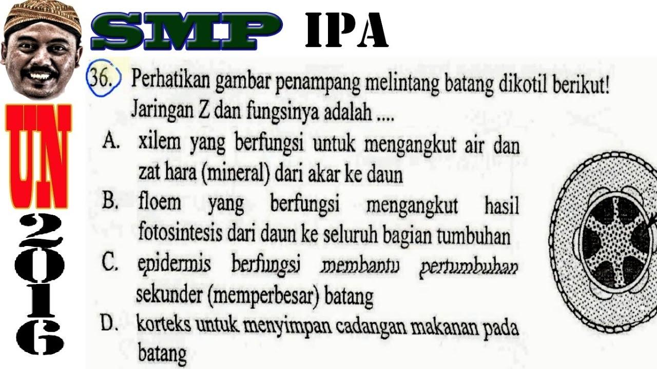 Un Smp 2016 Ipa Penampang Melintang Batang Dikotil No 36 Revisi Youtube