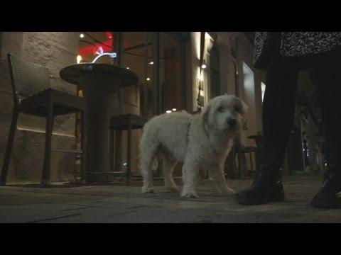 Le fichage des chiens autorisé à Béziers