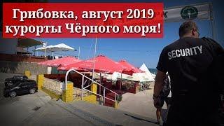 Грибовка, обзор 2019 август.