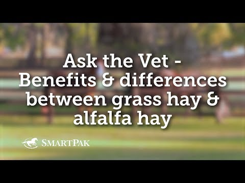 Ask The Vet - Benefits And Differences Between Grass Hay And Alfalfa Hay