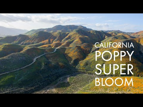 California Poppy Super Bloom Lake Elsinore 2019 Aerial Drone