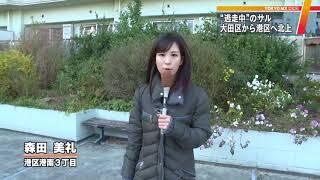 12月6日までに東京・大田区や品川区に出没していたサルが、7日はさらに...