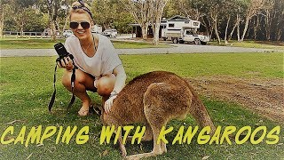 OZ Family Road Trip: Camping with kangaroos & swimming in the Pacific Ocean