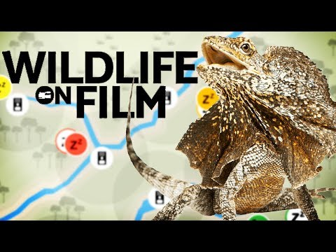 Filming A NATURE DOCUMENTARY! | Wildlife On Film