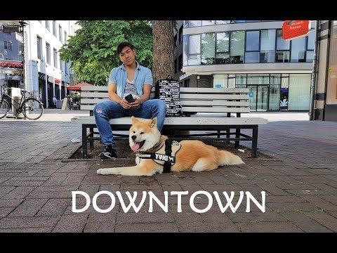 Akita Inu - Downtown (秋田犬)