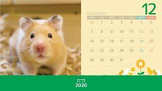 2020年のカレンダーを作りました。パソコンやスマホの壁紙にできます。...