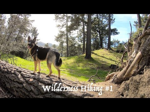 Hiking with German Shepherd #1 Hiking with Dog in the Bay Area Woods Part 1 of 4