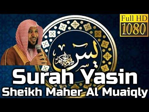 surah-yasin-full-سورة-يس:-sheikh-maher-al-muaiqly-ماهر-المعيقلي---english-translation