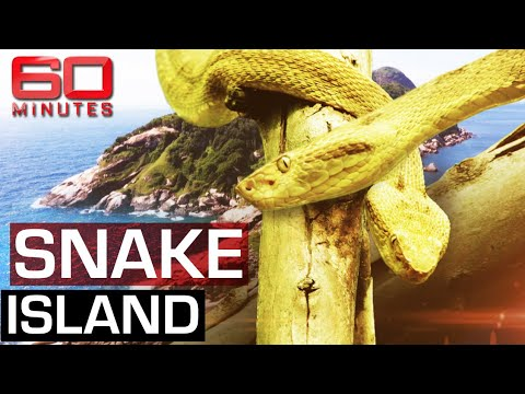 The deadliest place on earth: Snake Island | 60 Minutes Australia