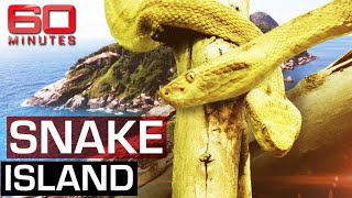 The Deadliest Place On Earth Snake  Sland  60 Minutes Australia